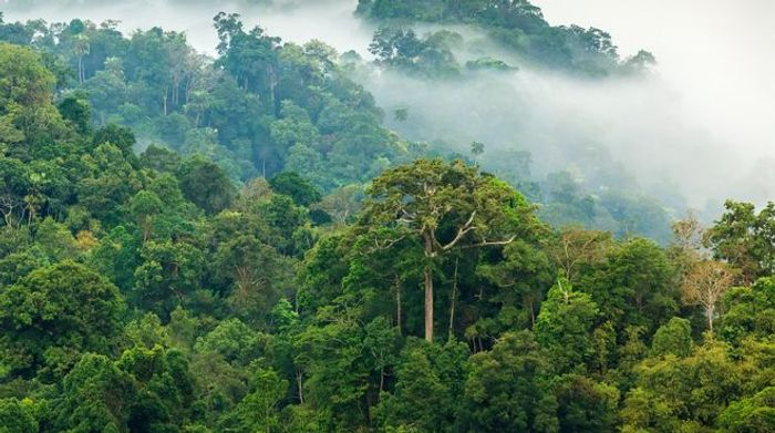 Photo: Rainforest Rescue