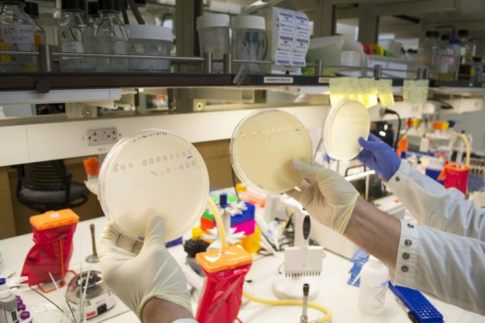 UC San Diego biologists in Justin Meyer's laboratory studied the lambda virus, which infects bacteria but not humans, through lab experiments that provided evidence for a new path of evolution. / Credit: UC San Diego