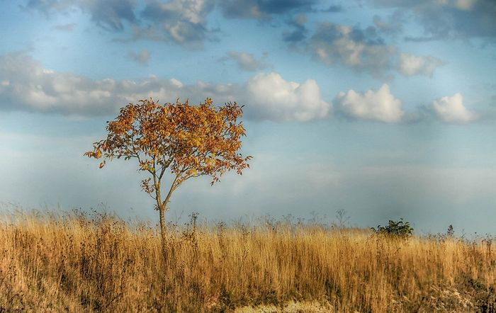 Soil drought contributes to atmospheric aridity, according to new research. Photo: Pixabay