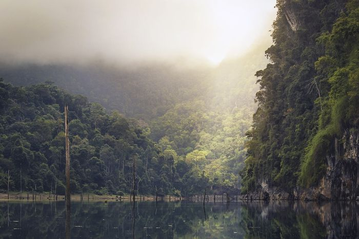 This new method provides detailed information about carbon emissions in Peru's rain forest. Photo: Pixabay