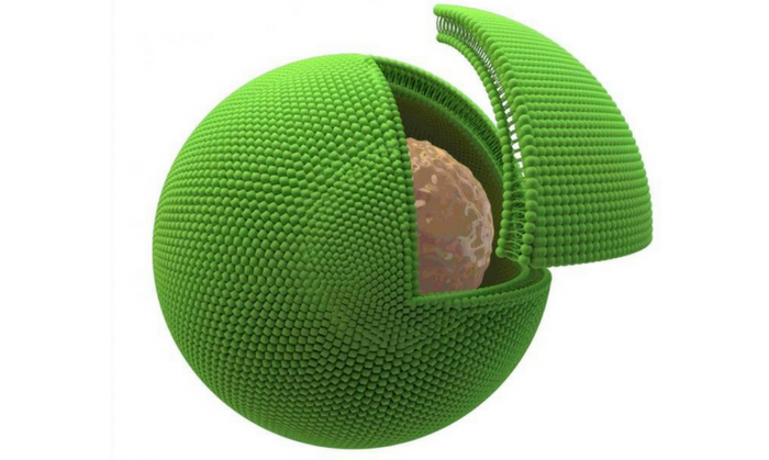 Drawing of a biological cell (brown) inside the artificial cell (green). Credit: ICL