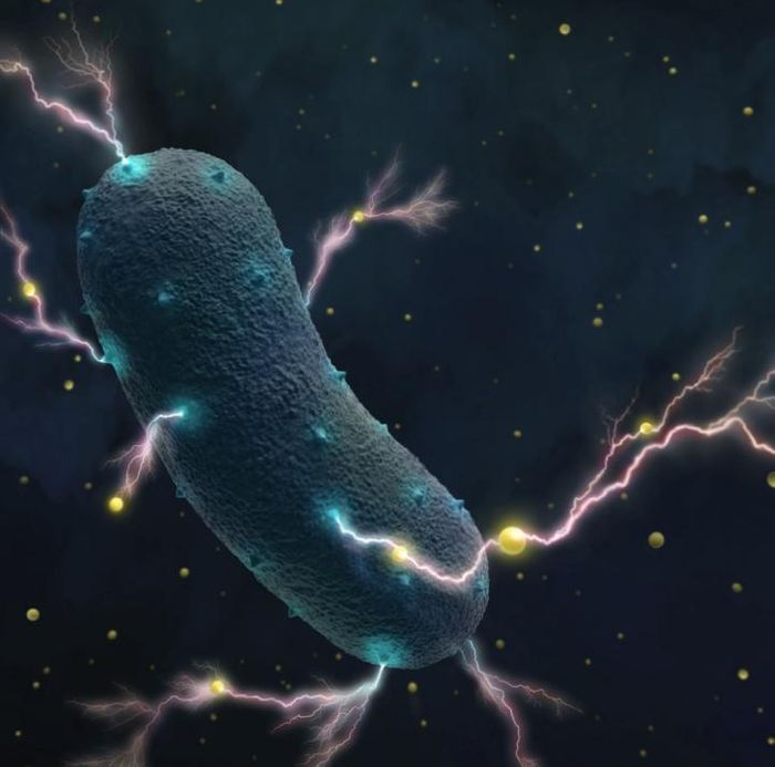 Listeria bacteria transport electrons through their cell wall into the environment as tiny currents, assisted by ubiquitous flavin molecules (yellow dots). / Credit: Amy Cao graphic. Copyright UC Berkeley.