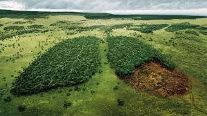Forests are the lungs of the planet. Photo: beforeitsnews.com