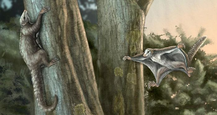 Despite popular belief, mammals were quite advanced during the time of the dinosaurs.