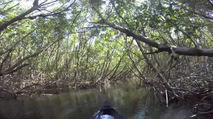 Mangroves and other coastal ecosystems are vulnerable to rising water temperatures. Photo: Pinterest
