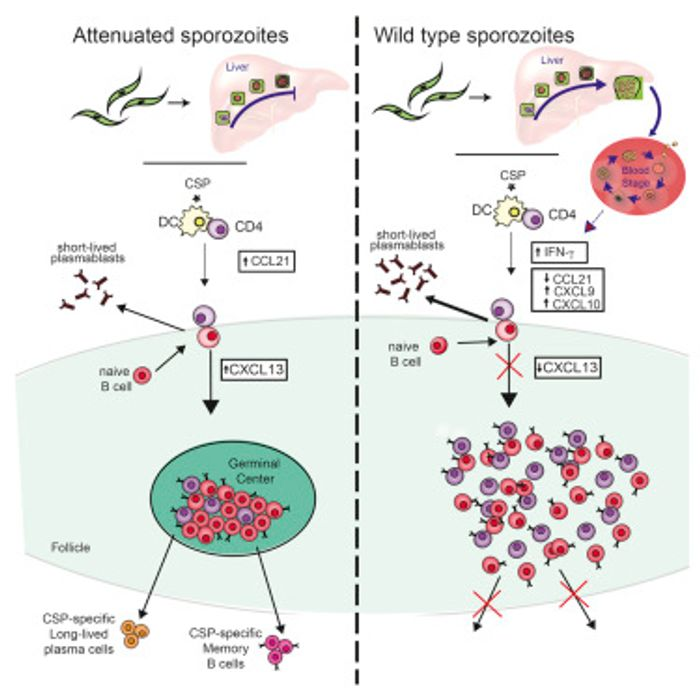 Cell Reports 2016 Keitany et al