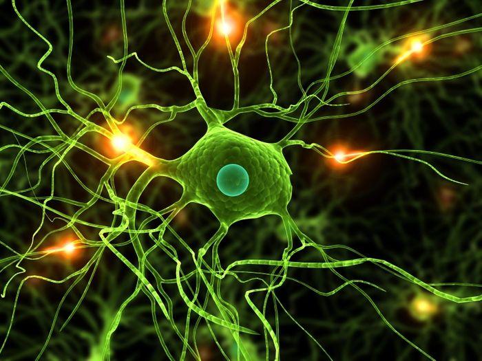 Microglia and neuron synapses