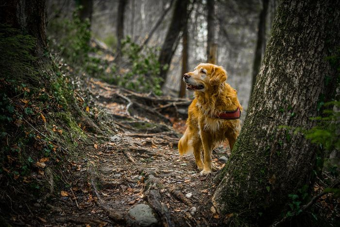 A dog allowed to roam the wilderness freely can be bad for animals that live there.