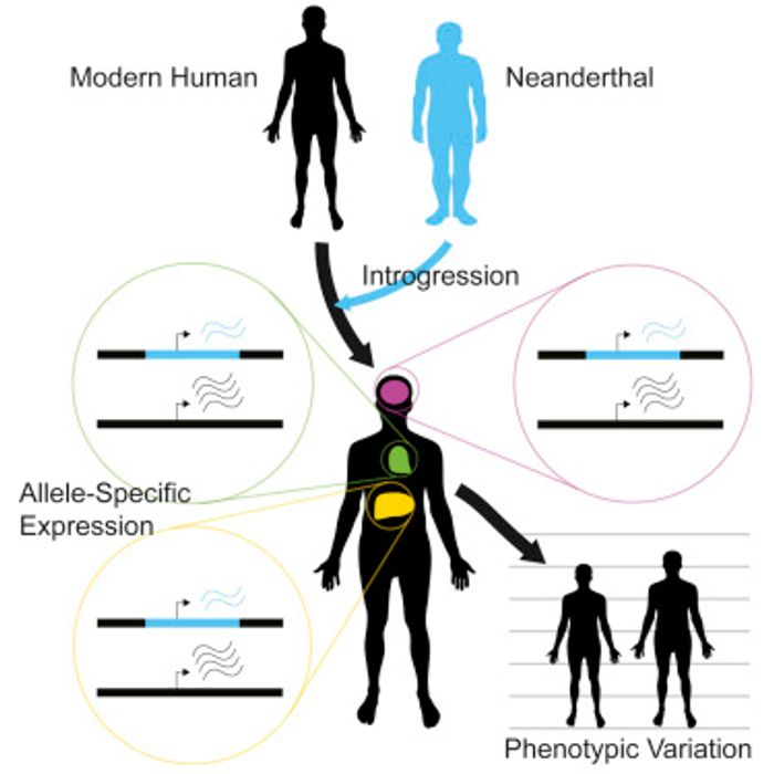 The graphical abstract from the work / Credit: Cell McCoy et al 2017