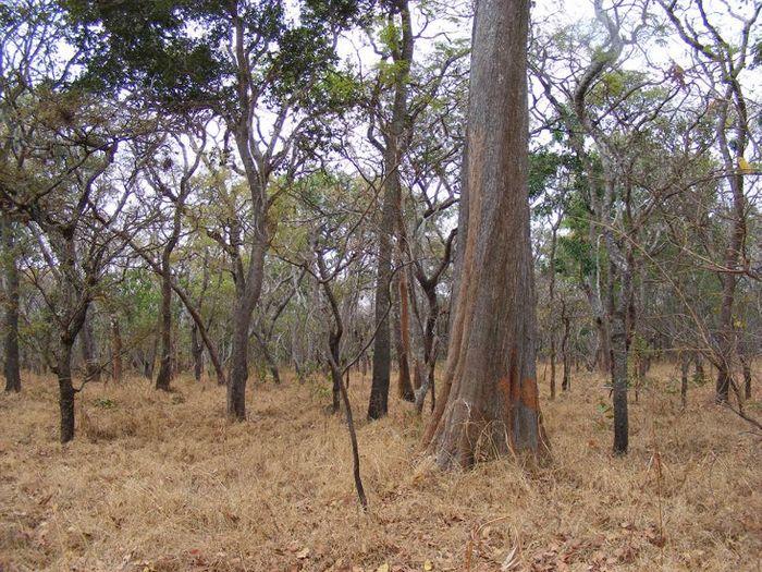 The Miombo woodlands offer crucial habitat for wildlife. Photo: VegetationMap4Africa