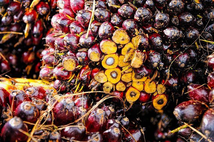Palm oil plantations threaten many species' habitats. Photo: Pixabay