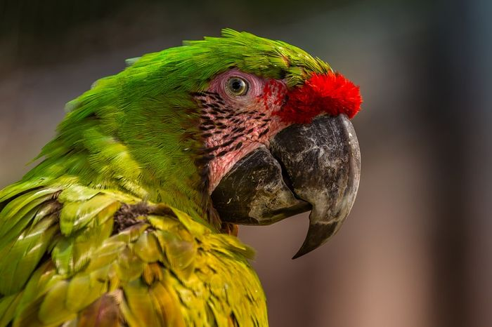 Parrots were just one of the bird groups analyzed in the study.