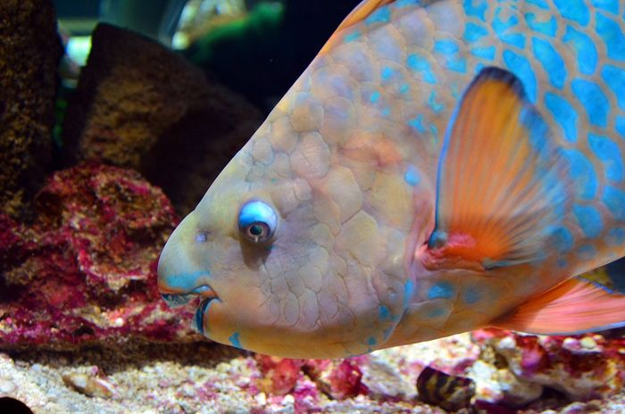 Parrotfish are an example of 'specialist' eaters, in that they choose to only eat specific things.