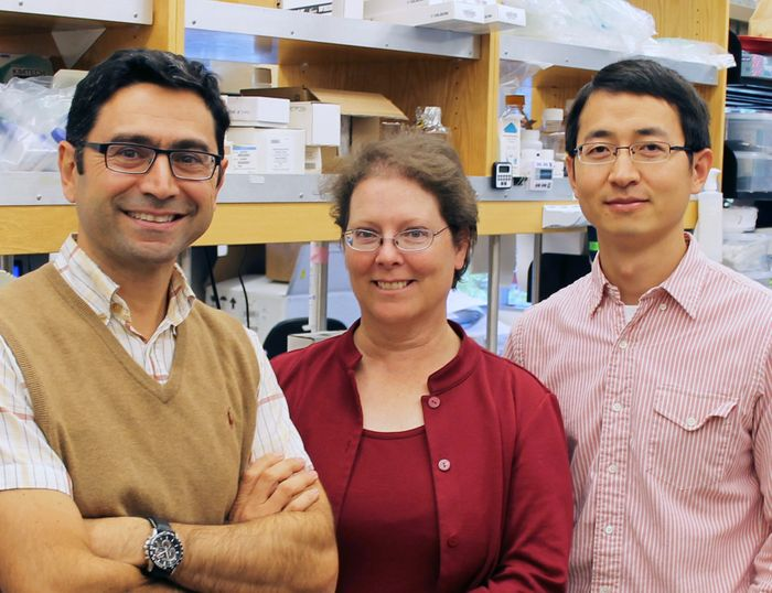 Authors of the new Cell paper include (left to right) Ardem Patapoutian, Adrienne Dubin and Zhaozhu Qiu.