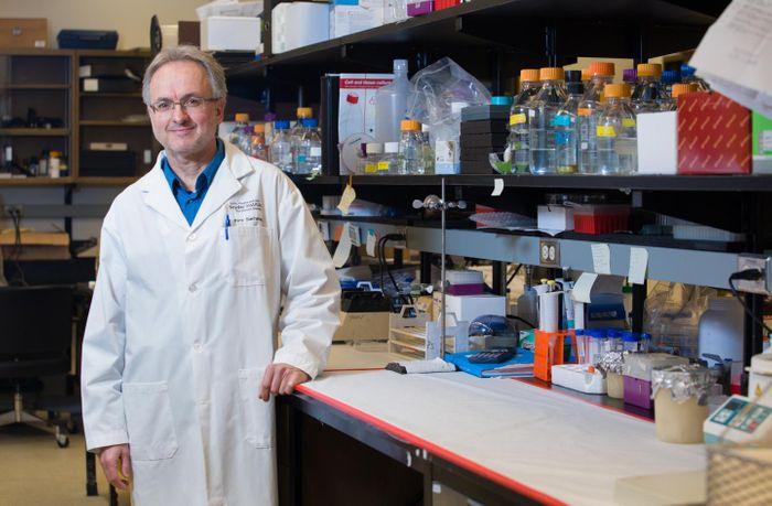 This is Dr. Pere Santamaria, MD, PhD, Cumming School of Medicine at the University of Calgary. / Credit: Riley Brandt, University of Calgary