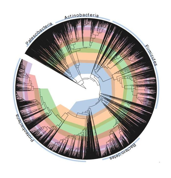 CAPTION The 'tree of life' for the bacterial world, bacteria's taxonomy in a phylogenetic tree. / Credit: The University of Queensland