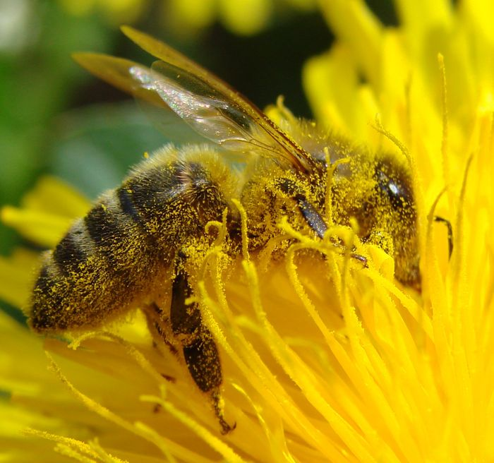 Bee pollination is declining.