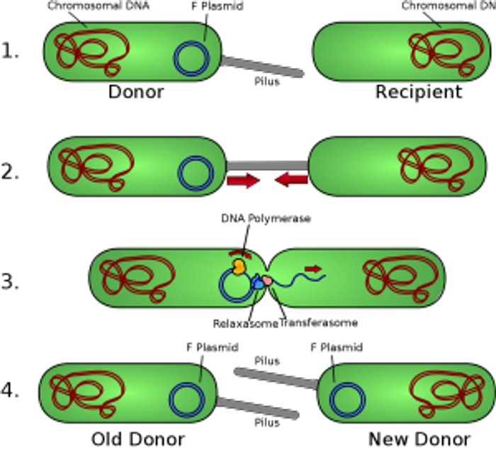 The mechanism of plasmid-mediated resistance
