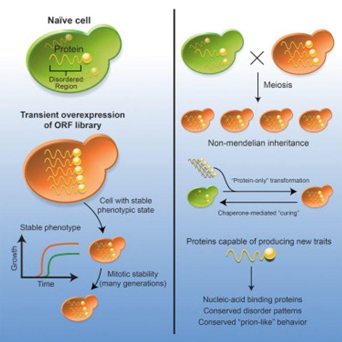 Cell 2016 Chakrabortee et al