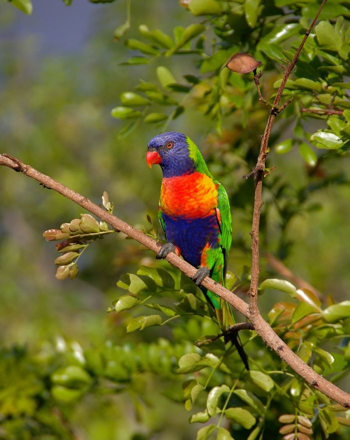 Parrots from Peru are just one of the types of animals known to partake in geophagy.