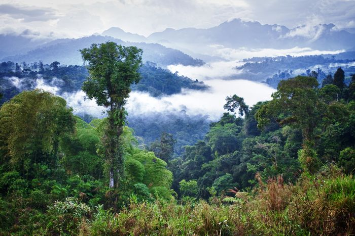 Tropical forests like this one in Ecuador are losing twice as many trees as they were 35 years ago. Pacific Standard