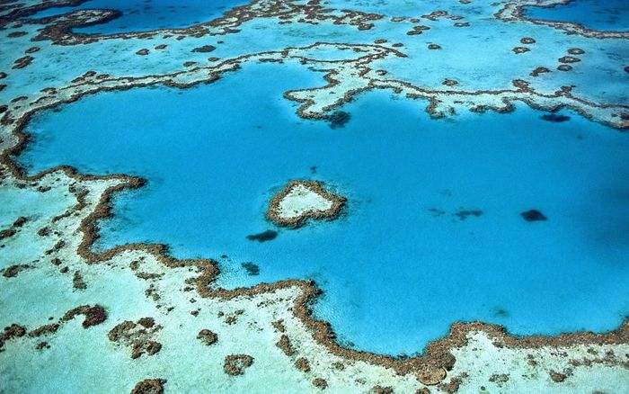 The Coral Reef Atlas could help identify coral reefs that require urgent conservation. Photo: Pixabay