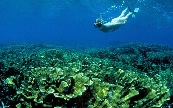 Coral reefs in Florida Keys bring tourists and their wallets to the region. If corals go, so will the region's economy. Photo: The Nature Conservancy