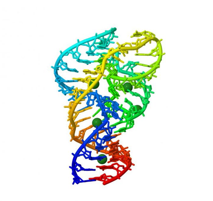 An image of the 3-D structure of a ribozyme. CREDIT OIST
