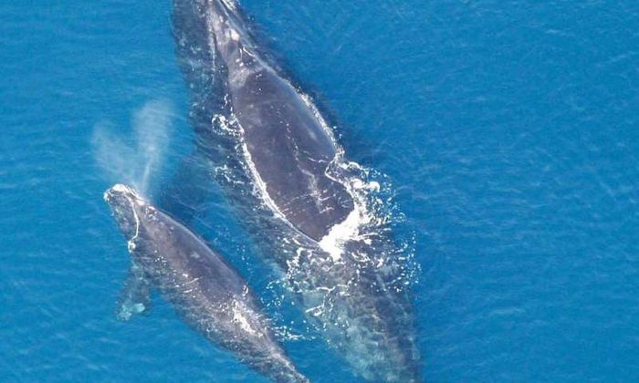 Can a whale's blowhole spray provide important information about the animals' health?