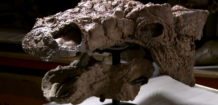 Zuul's skull is remarkably well-preserved.