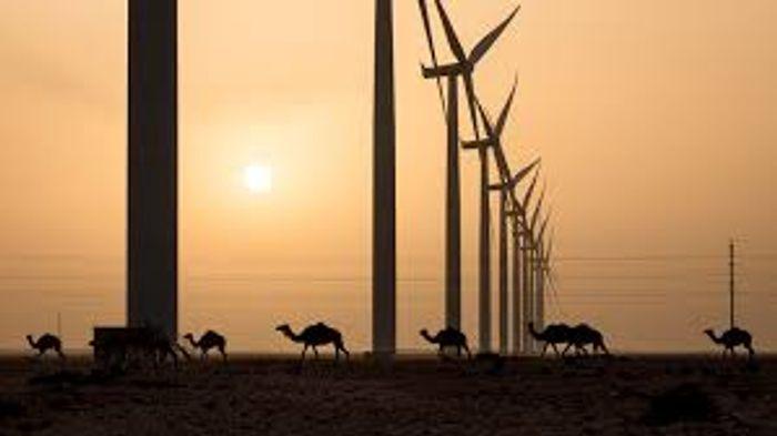 Wind turbines cross the desert. Photo: UNU Our World
