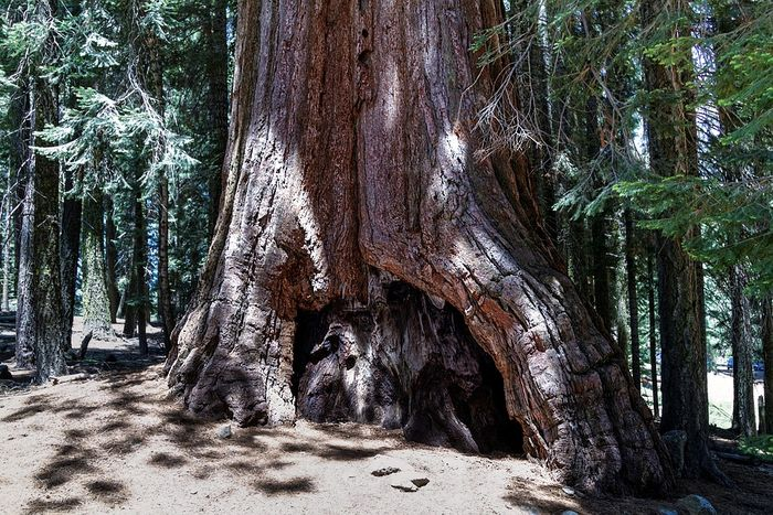 Sequoia National Park has some of the worst air pollution levels. Photo: Pixabay