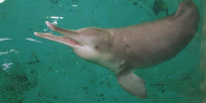 Was the Yangtze River Dolphin spotted again in China despite 'extinct' status?