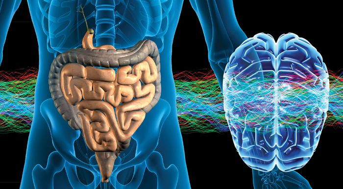 Cortisol may link the gut and brain.