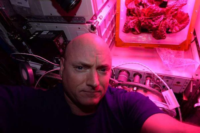 U.S. astronaut Scott Kelly poses for a selfie with some space-grown lettuce.