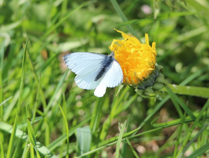 Butterflies are experiencing a biodiversity loss problem because of urbanization.