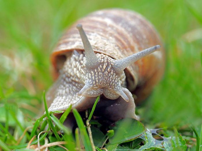 An ordinary snail.