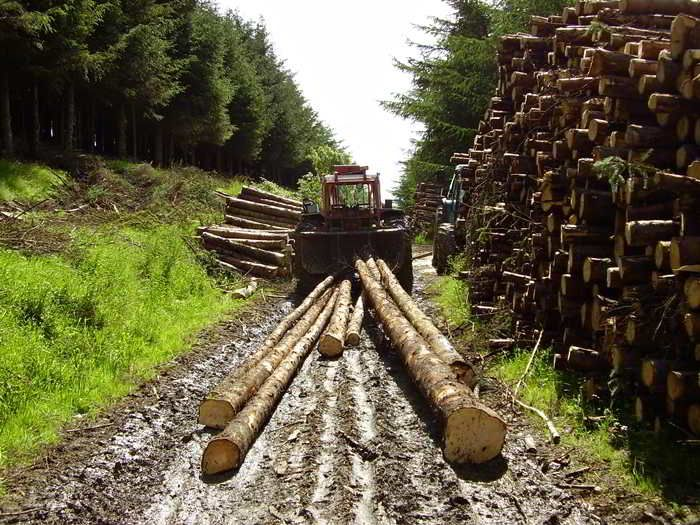 An example of whole-tree skidding. Photo: A.C. Rourke Timber Contractor & Tree Surgery