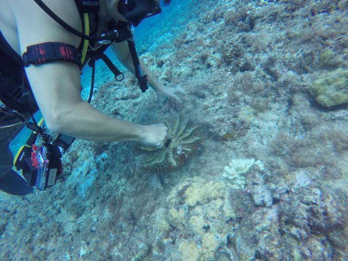 Marine specimens, such as a sponge shown here, are collected and brought back to the laboratory of University of Guam Professor Dr. Jason Biggs for preservation, cataloging, and further study. / Credit: Jason S. Biggs/University of Guam