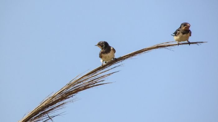 Certain birds may live longer in tropical climates than temperate ones, researchers confirm.