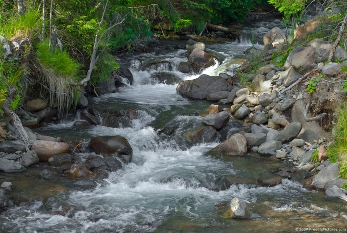 Stream health can tell us about an entire ecosystem. Photo: Livestream